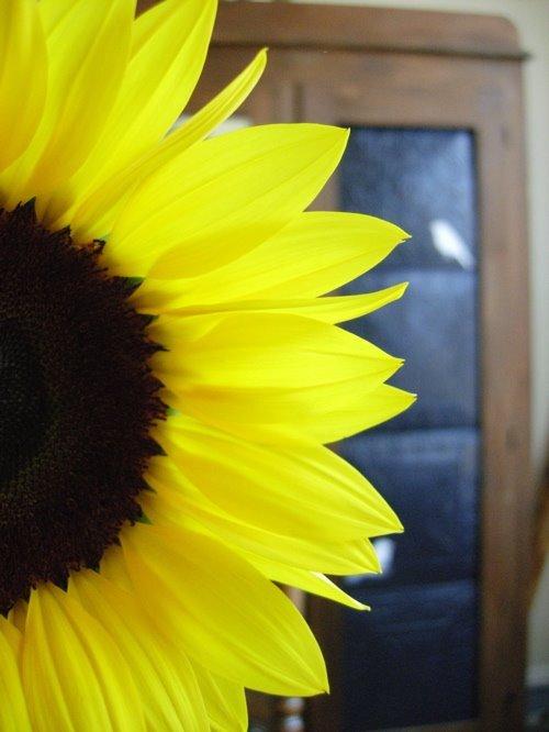 sunflower_big