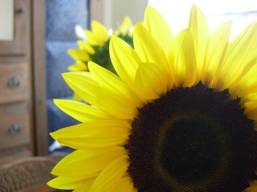 sunflower_big2