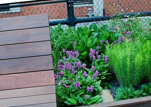 High Line Erin-4