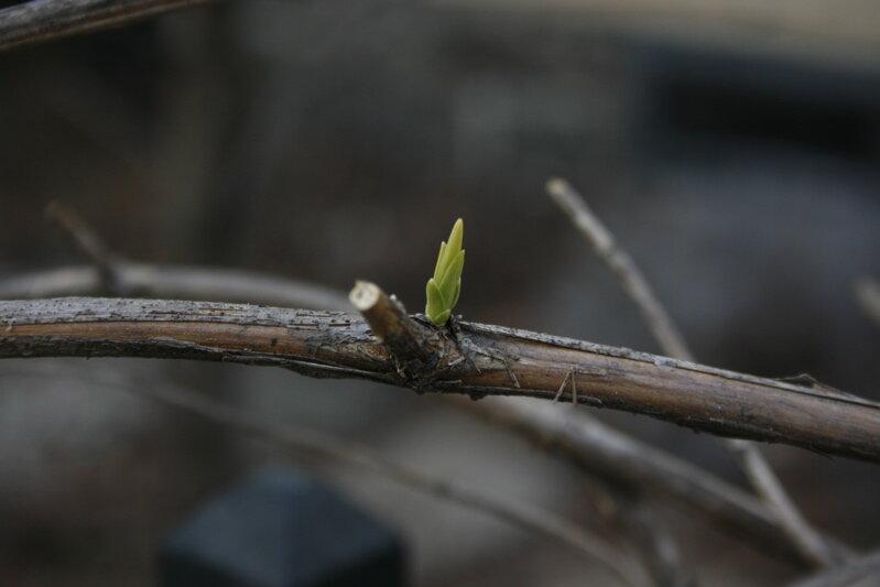 spring7