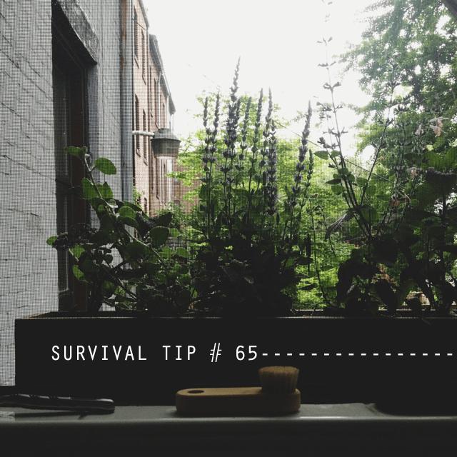 survivaltip65