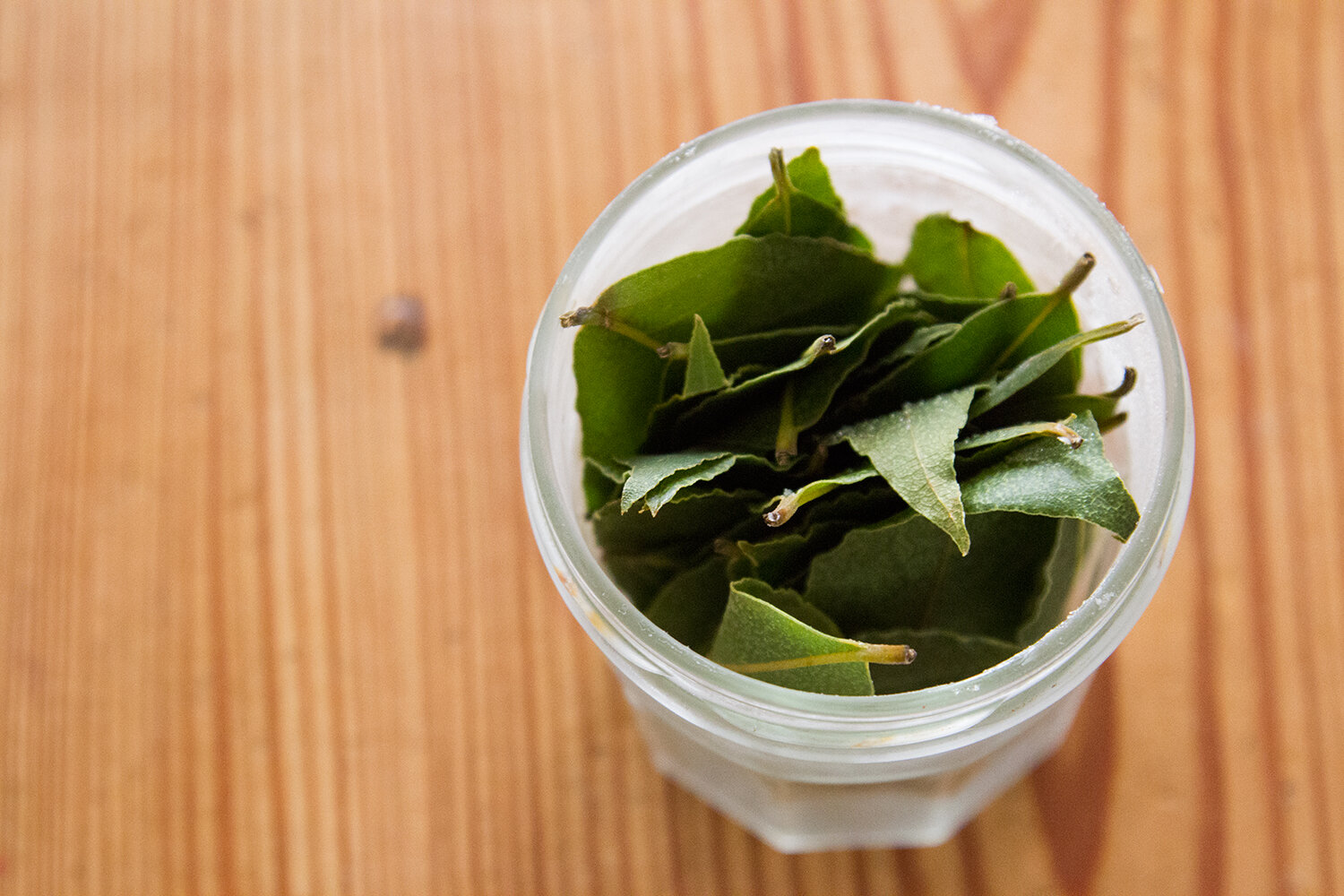 bay_leaves_reading_my_tea_leaves_IMG_4666