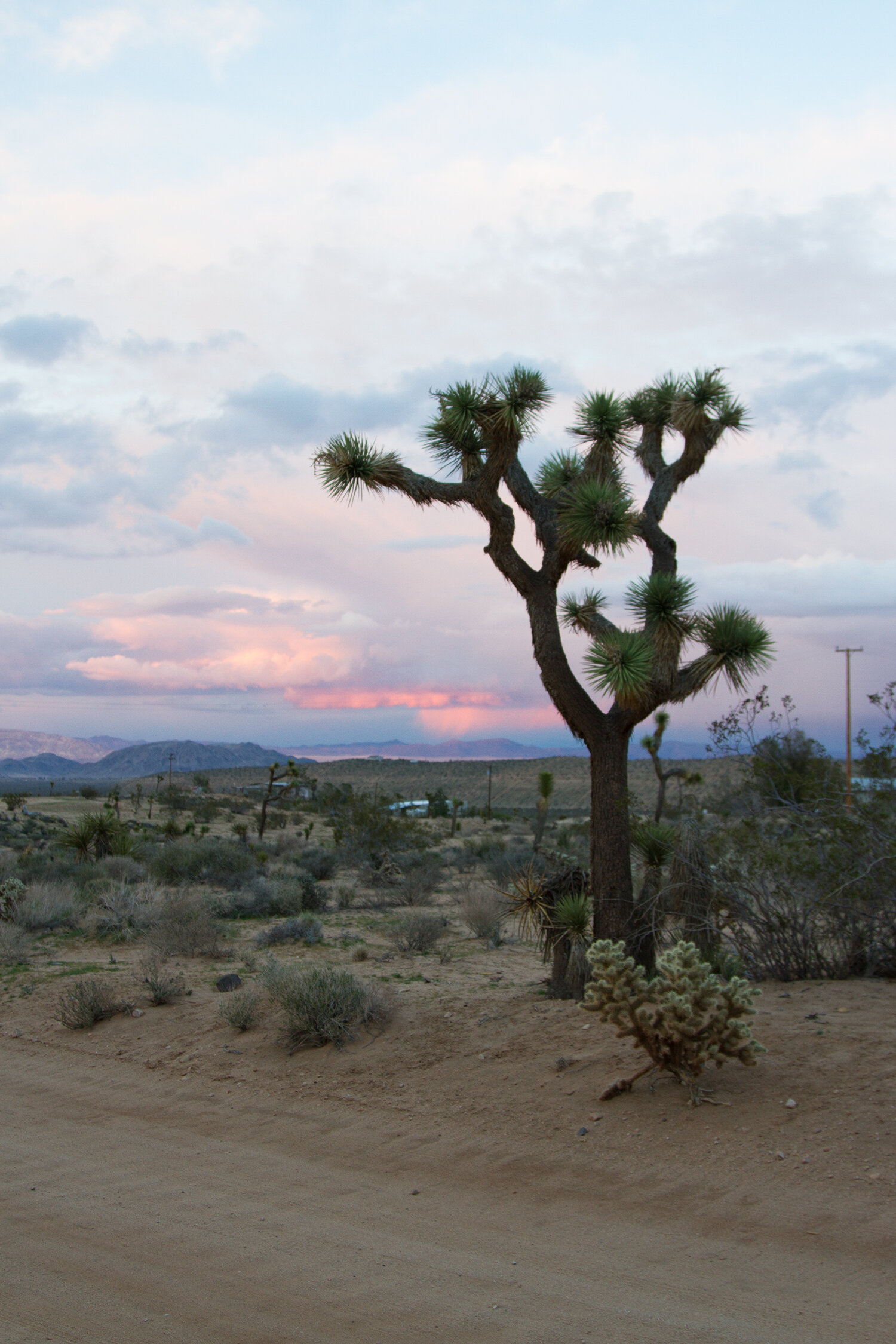 out and about: joshua tree | reading my tea leaves