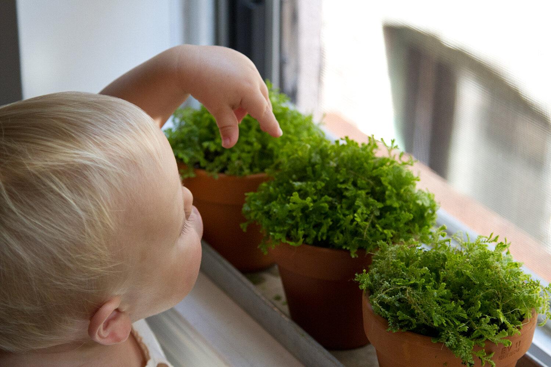 toddler_gardening_reading_my_tea_leaves_IMG_6827
