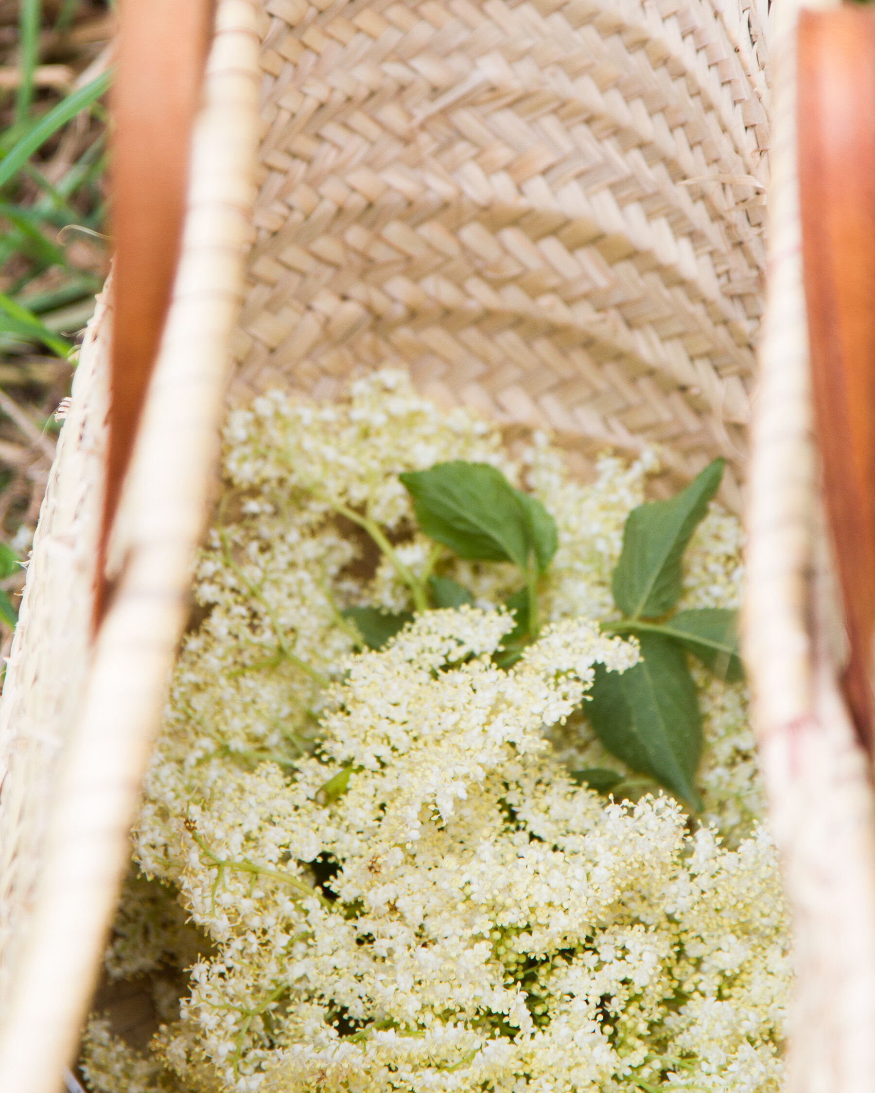 elderflower cordial | reading my tea leaves