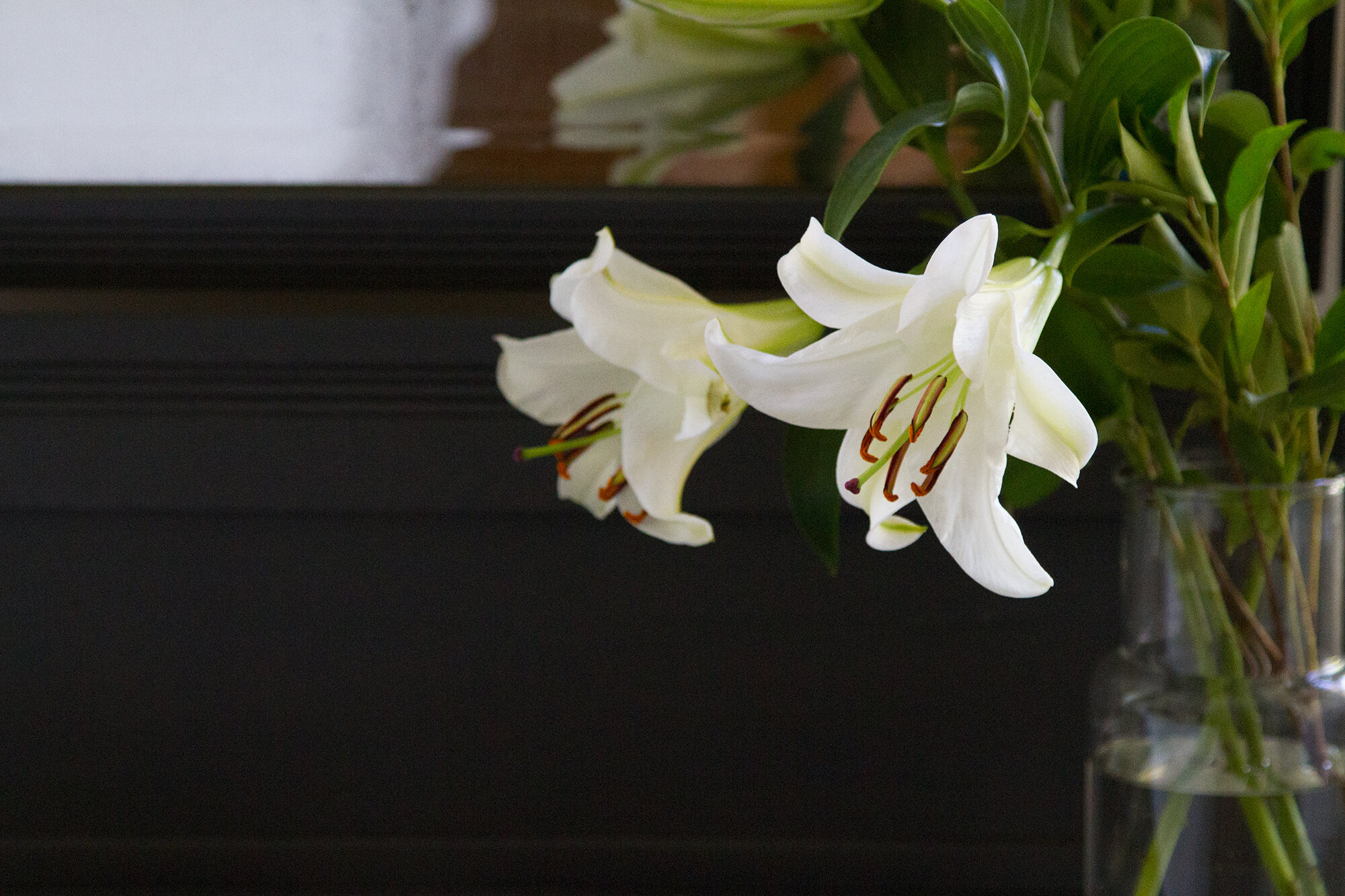 lilies_reading_my_tea_leaves_IMG_2285