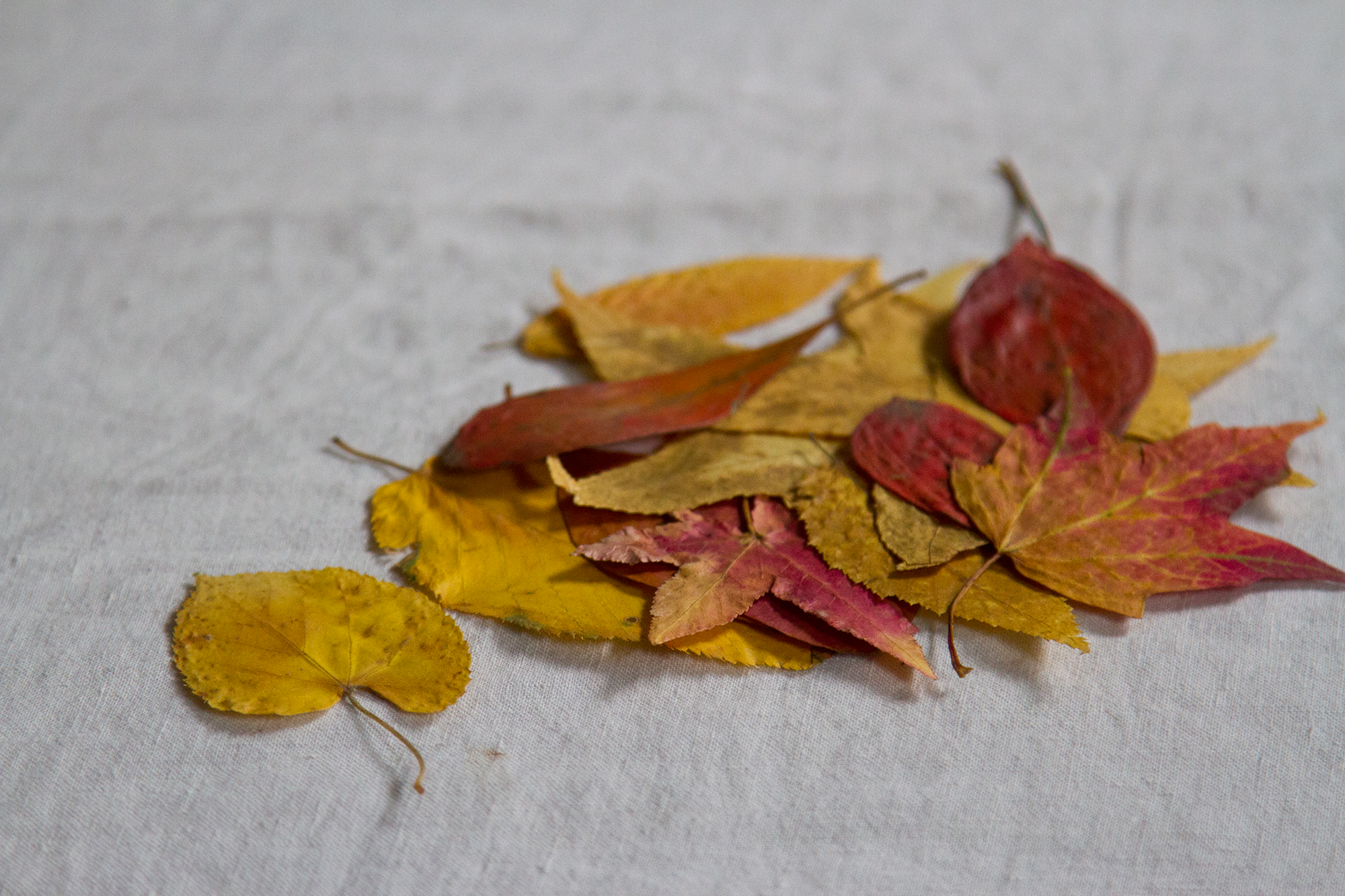 leaves_reading_my_tea_leaves_img_4177