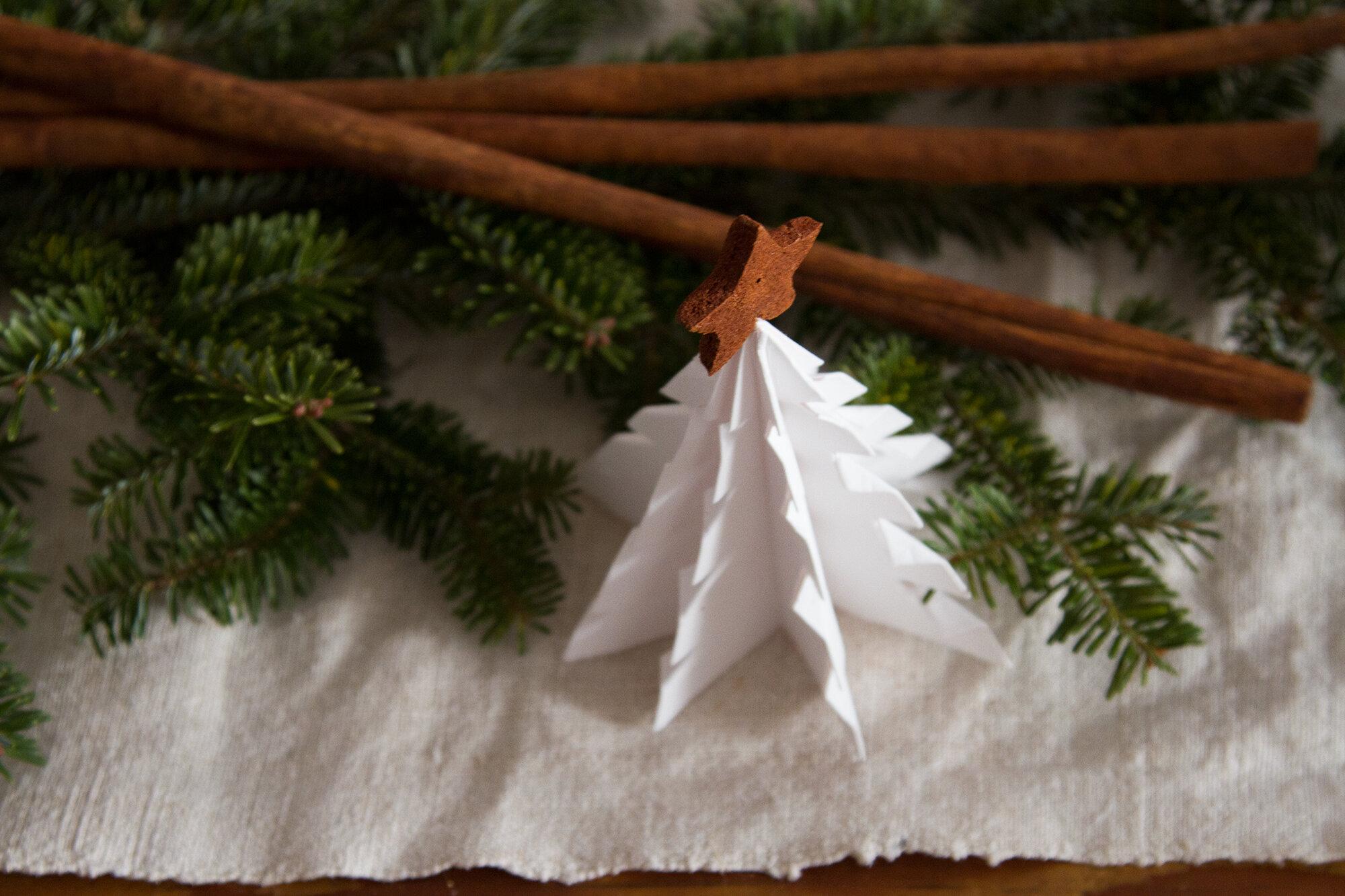 paper tree | reading my tea leaves