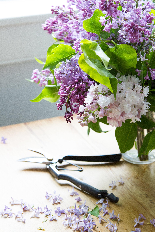 edible flower ice cubes | reading my tea leaves
