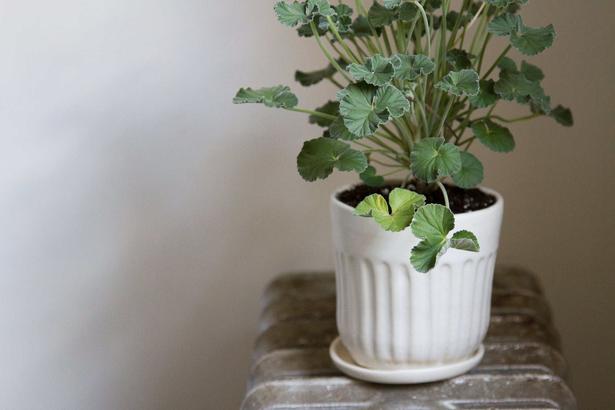 Simple Stuff Planters And Pots Reading My Tea Leaves Slow