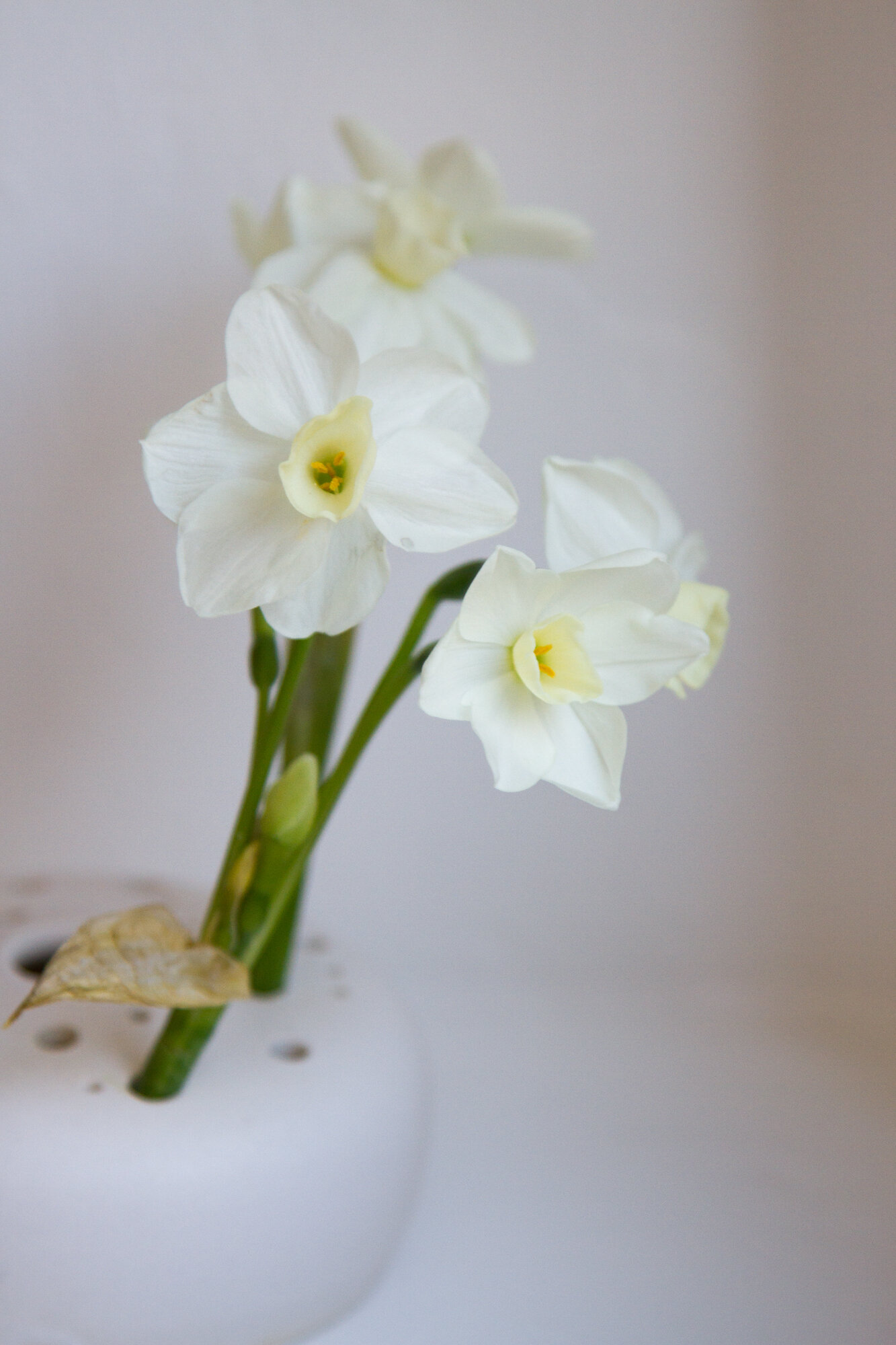 white daffodils in a white flower frog.