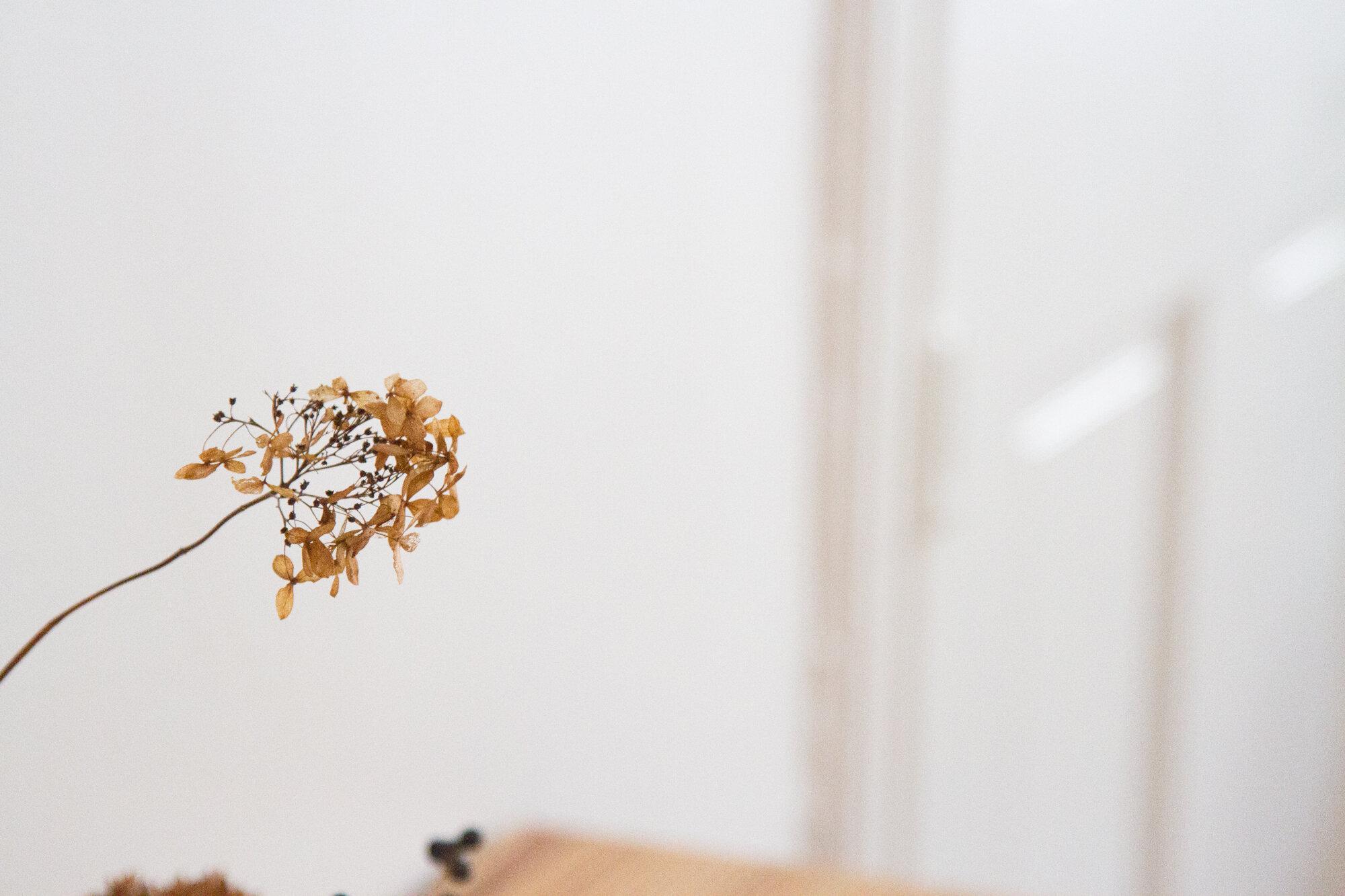 dried flower | reading my tea leaves