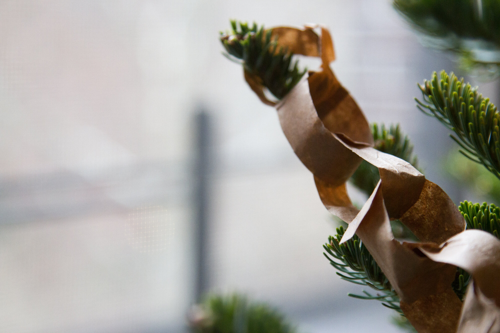 paper chains | reading my tea leaves