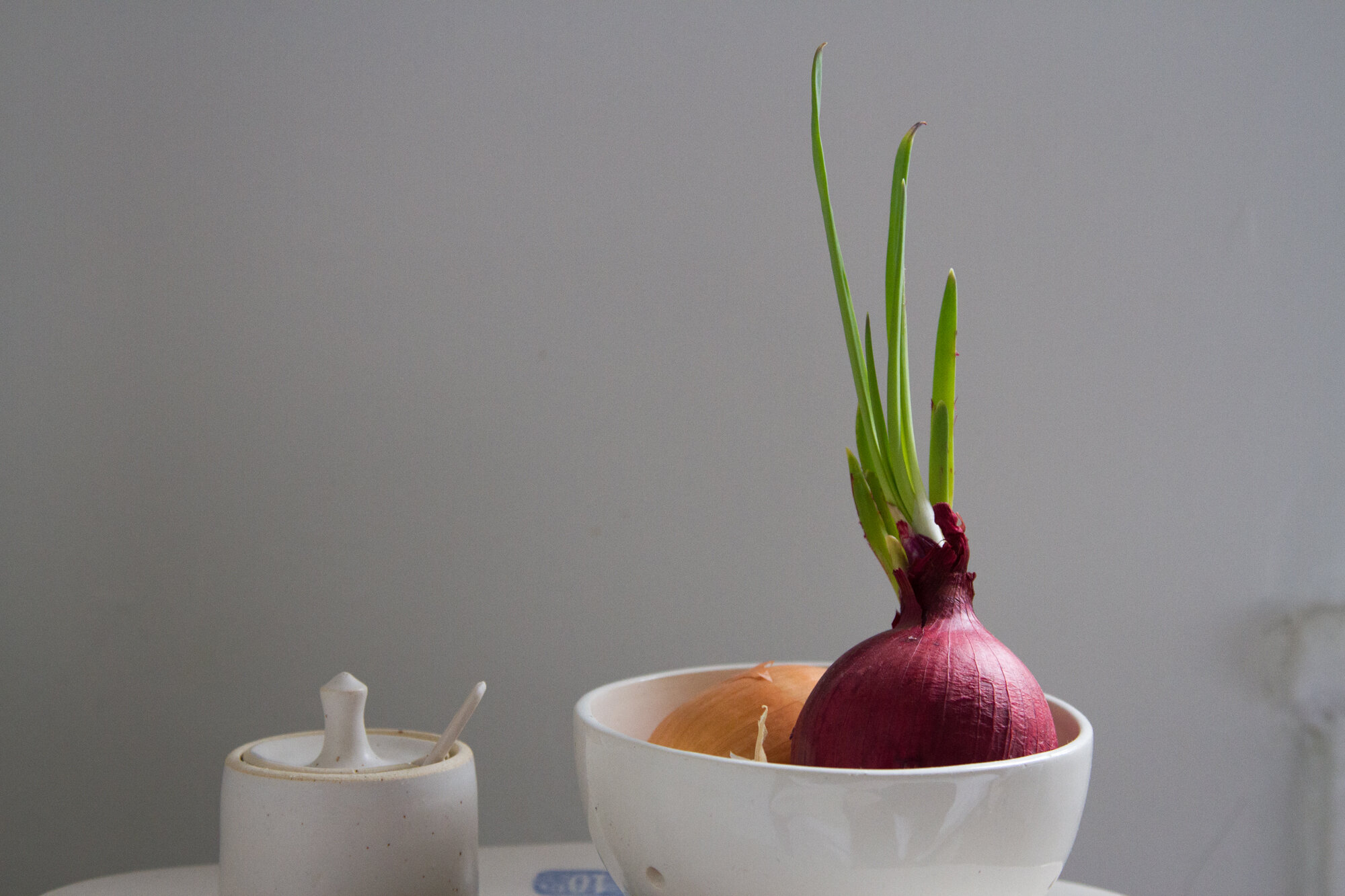 sprouted onion | reading my tea leaves