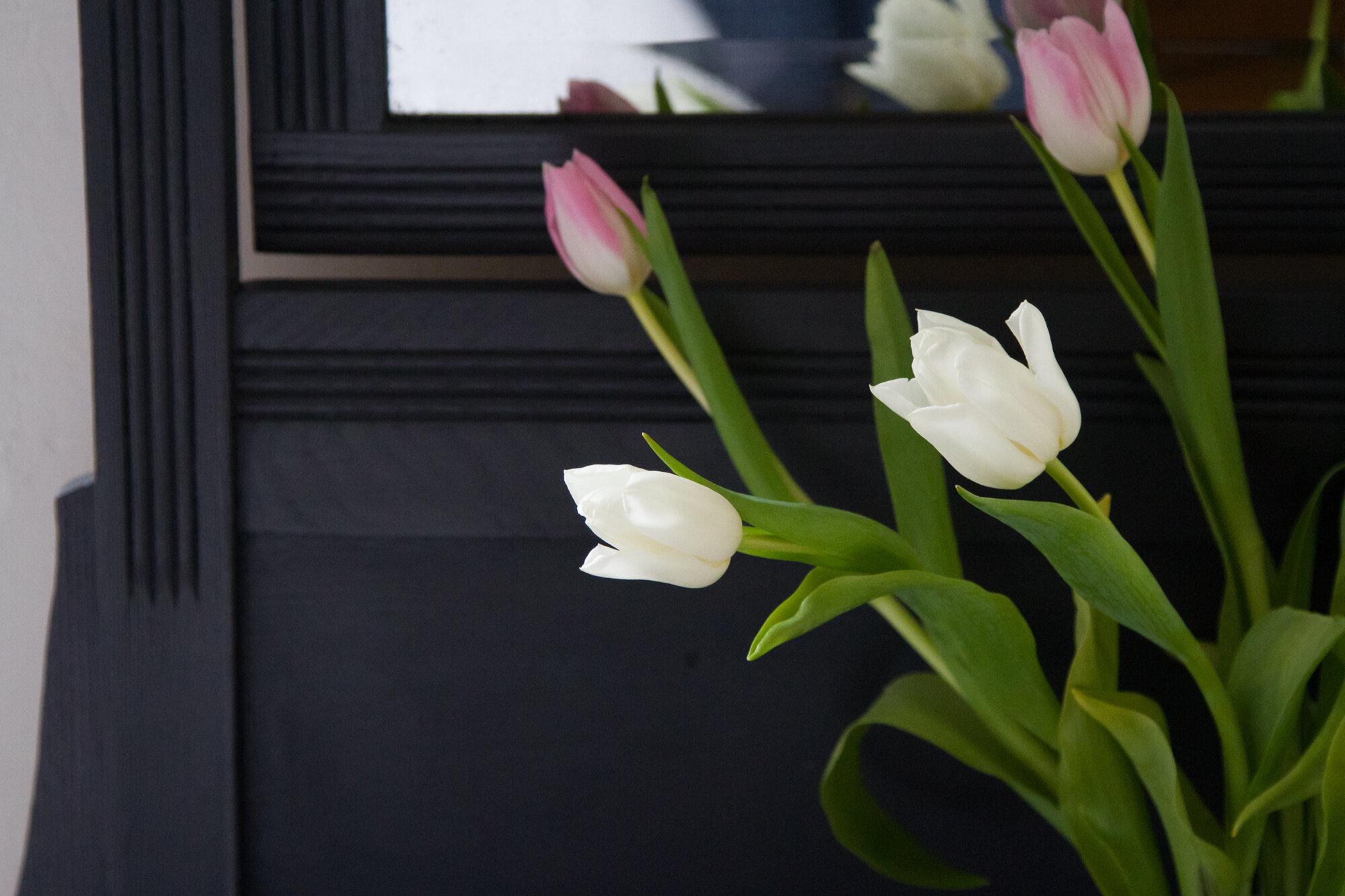 tulips | reading my tea leaves