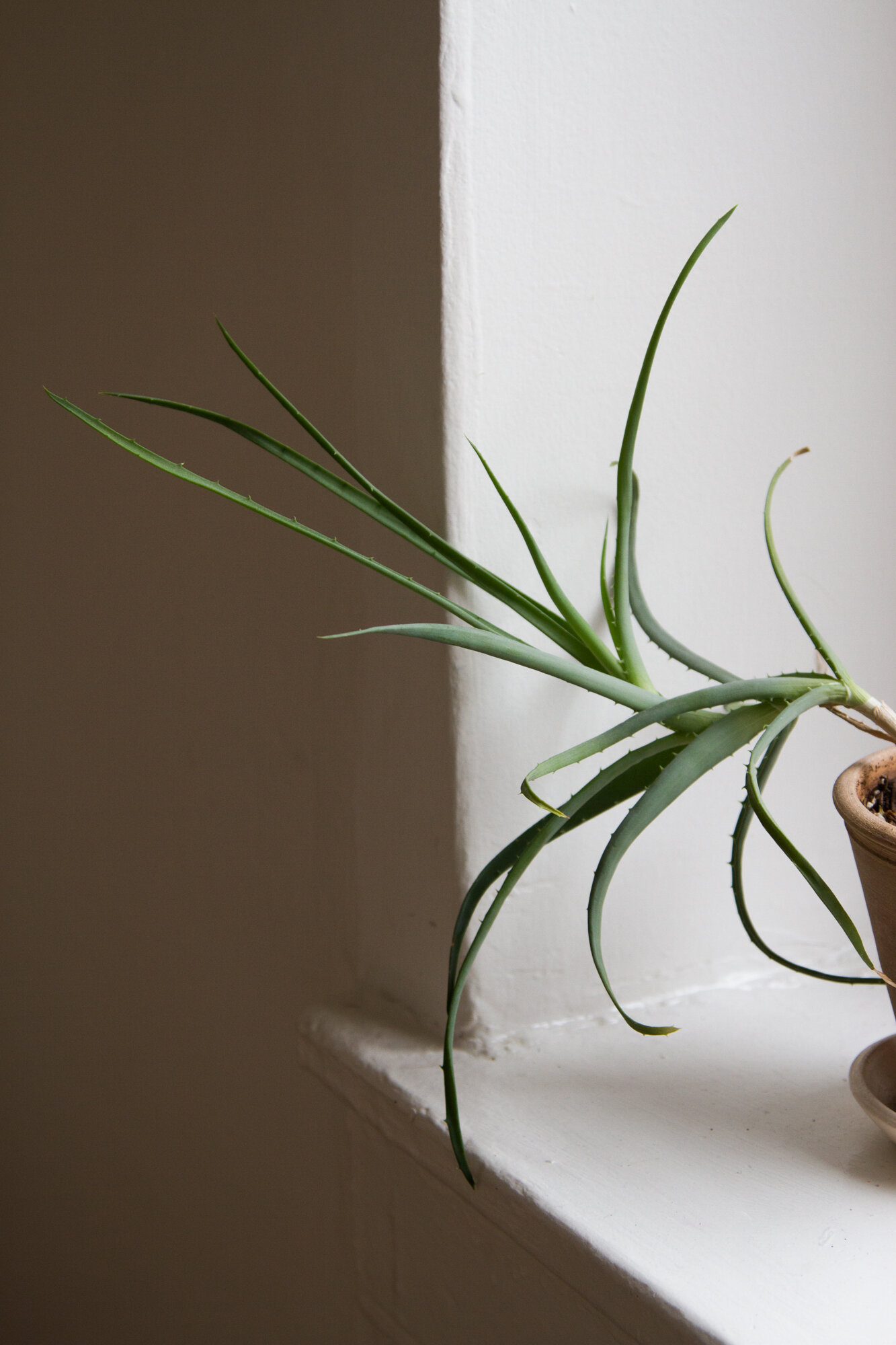house plant | reading my tea leaves