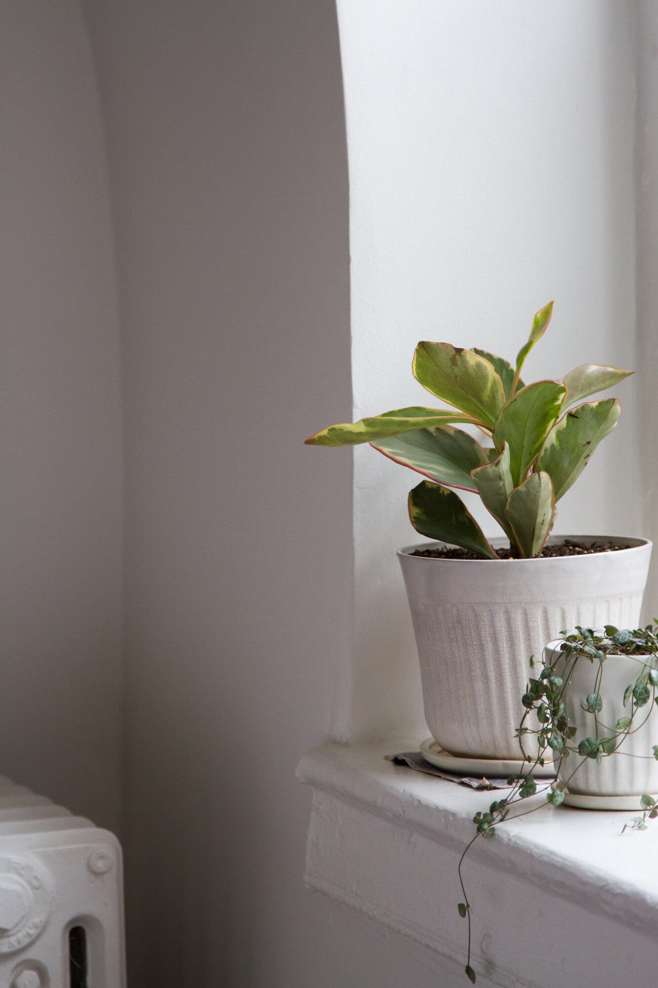 houseplants | reading my tea leaves