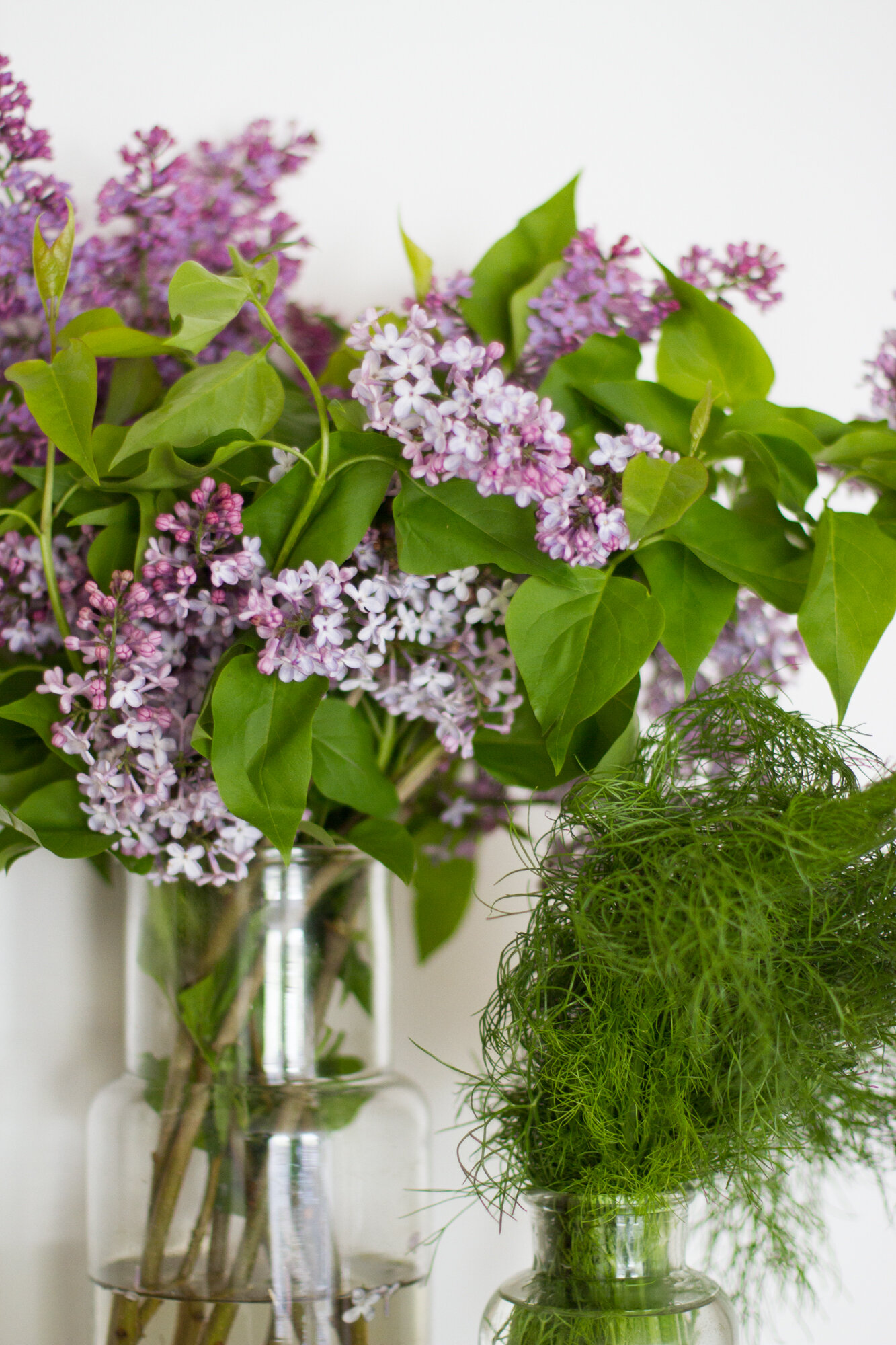 lilacs and fennel tops | reading my tea leaves